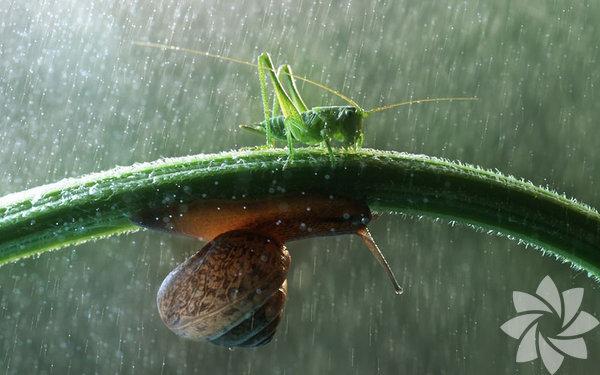 Şemsiyenin en doğal hali