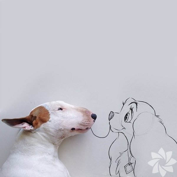 Instagram hesabında yayınladığı fotoğraflarla dikkat çeken Brezilyalı illüstratör Rafael Mantesso, köpeği Jimmy'nin komik pozlarını çizimlerle süsleyerek harika kareler yaratıyor.