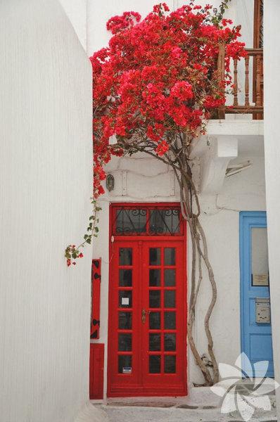 Çiçekli kapılar