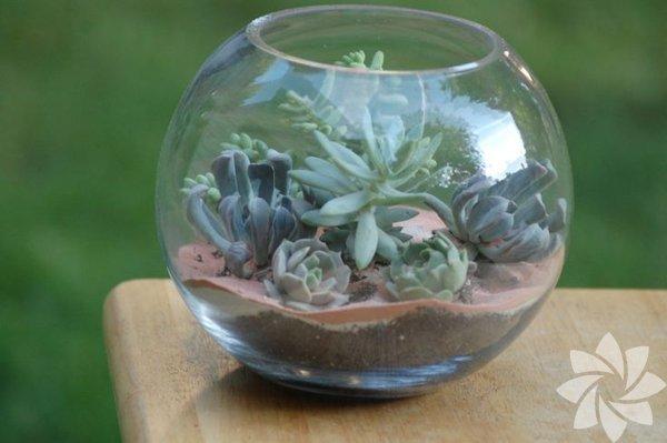 İç mekana göz alıcı bir terrarium ekleyin. Sadece ortamı oksijen  bombardımanına tutmayacak, dekoratif olarak da evinizin havasını  değiştirecek. Farklı boyutlarda üretmeniz de olası.