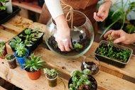Evinize renk katar: Terrarium