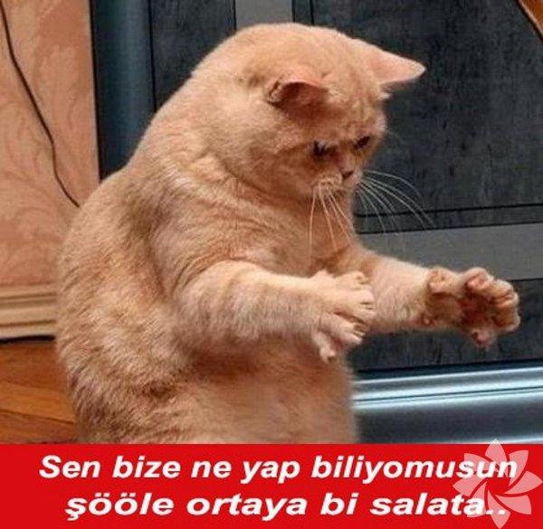 En Komik Kedi Caps Leri Yaşam
