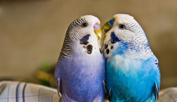 Bugün neşeli, esprili ve aşk doluyuz!