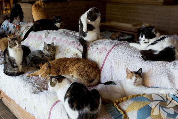 Çok kediyle yaşayan aileler sizce ne durumdadır? Biz en az 3 kedi diyoruz! En az 3 kedi