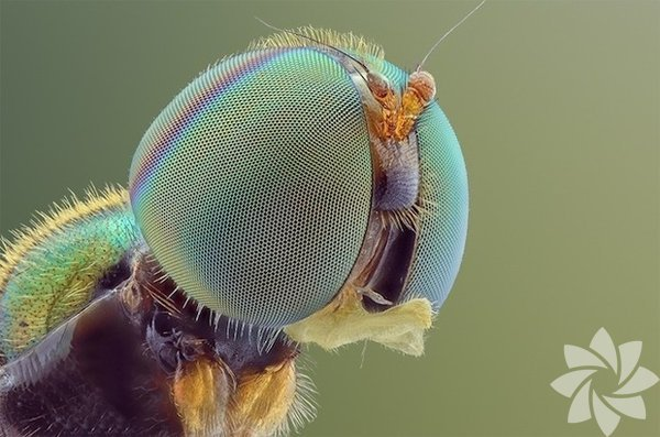 Yakın plan böcekler...