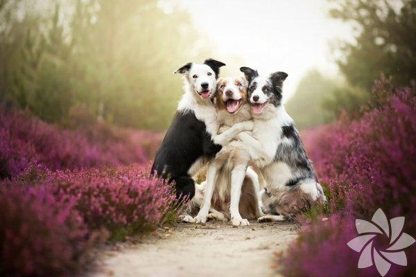 Gülümseyen hayvanlar