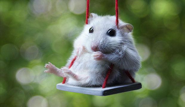 Hamsterların dünyasına hoşgeldiniz
