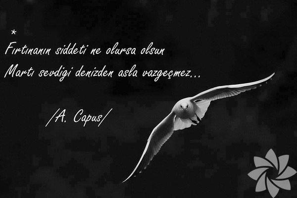 A. Capus