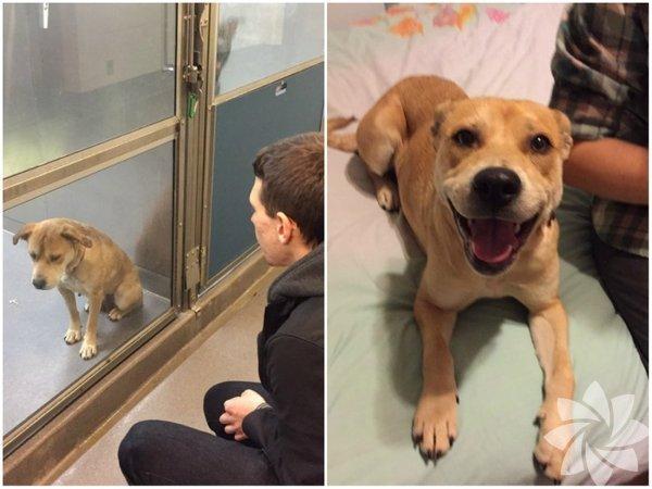 Barınaktan alınan bir köpek ve bakışlarındaki mutluluk