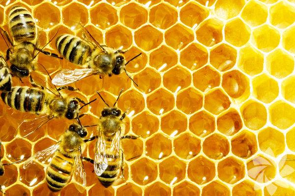 62. Bir arının yarım kilo bal üretebilmek için 2 milyon çiçeğe konması gerekir.