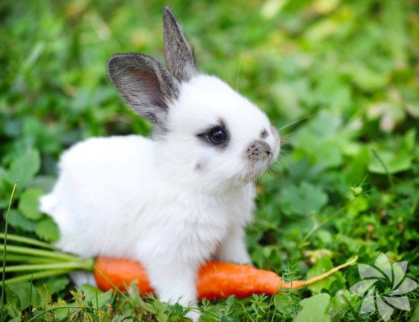 2. Yalnızca tavşanlar ve papağanlar, kafalarını çevirmeden arkalarını görebilirler.