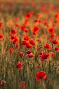 Daha mutlu olmanın 4 yolu
