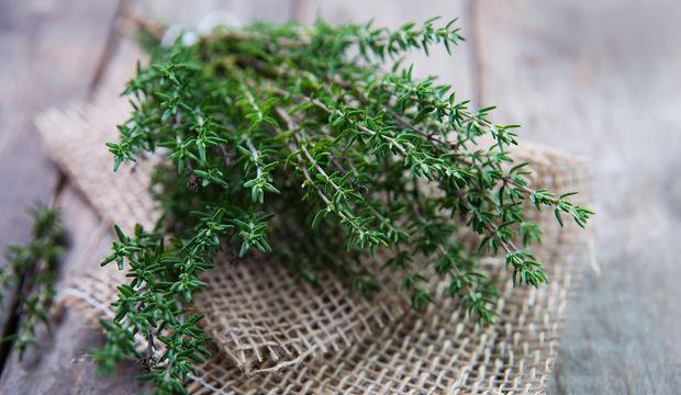 Adet söktürücü bitkiler