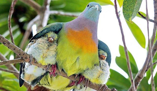 Kuşların şehir hayatı...
