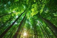Dünyanın en güzel ormanları