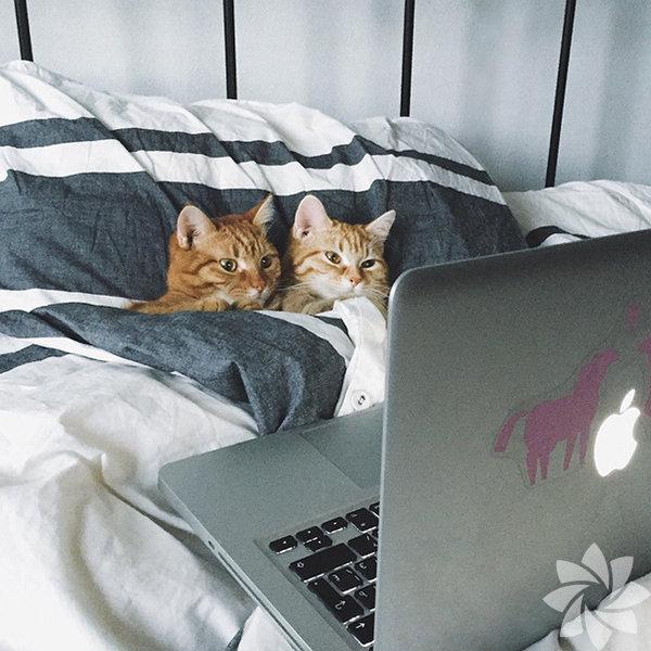 Aşk, sevgi her yerde aynı.