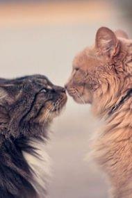 Dünya Kediler Günü kutlu olsun!