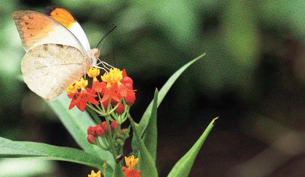 İstanbul'da bir kelebek çiftliği