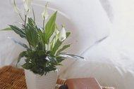 NASA evinizi temizleyen bitkileri açıkladı