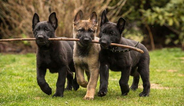 Kardeşinizle arayı bulmanın 7 yolu