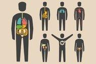 Tam olarak ne işe yaradığını bilmediğimiz 9 organımız