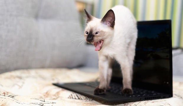 İş hayatınız çok mu yoğun?