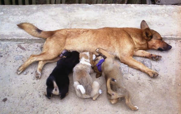 Yeni anneler çok iyi bilir, uyumak için her fırsatı değerlendirmelisiniz...