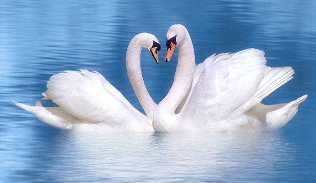 Aynı anda iki kişiye aşık olunur mu?