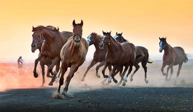 Atları fotoğraflayan adam
