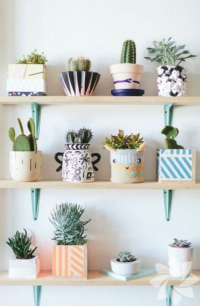 Kitaplıklara hayat katan bitkiler