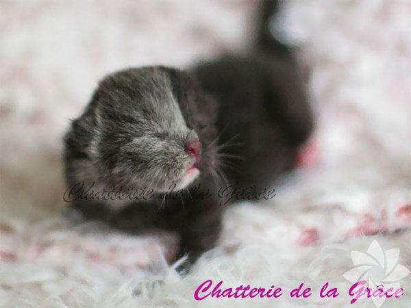 Fransa'da genç bir kedi, görenleri hayrete düşürüyor.