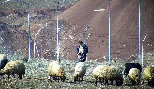 Koyunları otlatırken kitap okudu kalpleri ısıttı