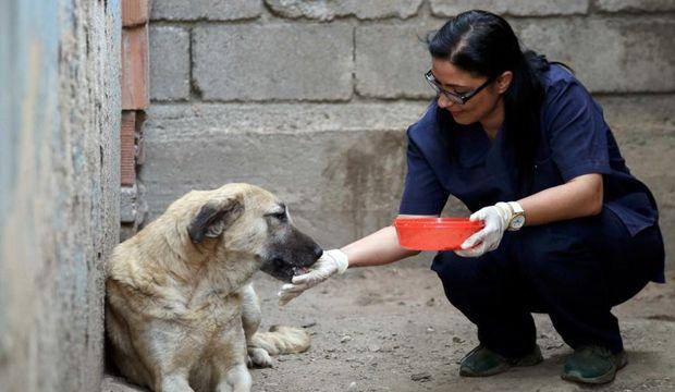 Köpeklere yeni bir hayat sunan harika insan