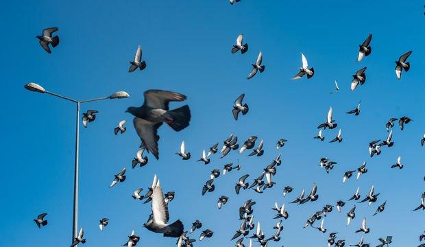 Baharın kuşları