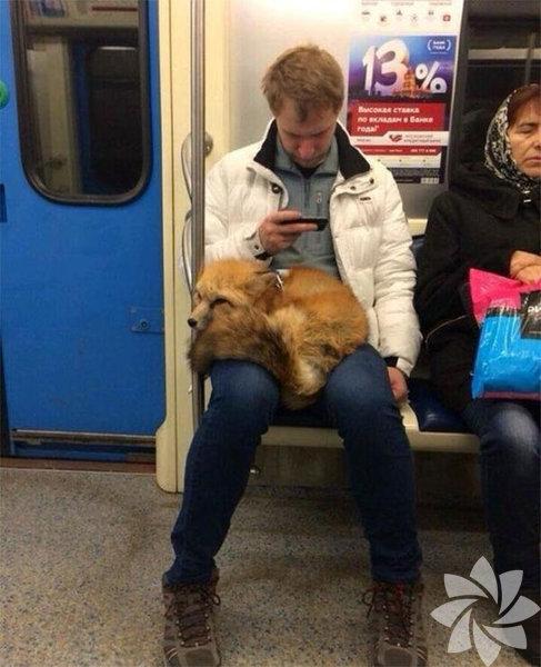 Metroların en ilginç yolcuları