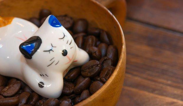 Ah, o kahve kokusu ve kedi mırlaması
