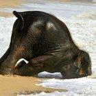 Hayvanlar pazartesi sendromu yaşarsa...