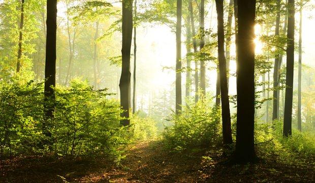 İskoçya'da resmi doktor reçetesi: Doğaya git!