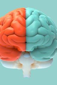 Yanlış biliyoruz: Erkek ve kadın beyni farklı değil!