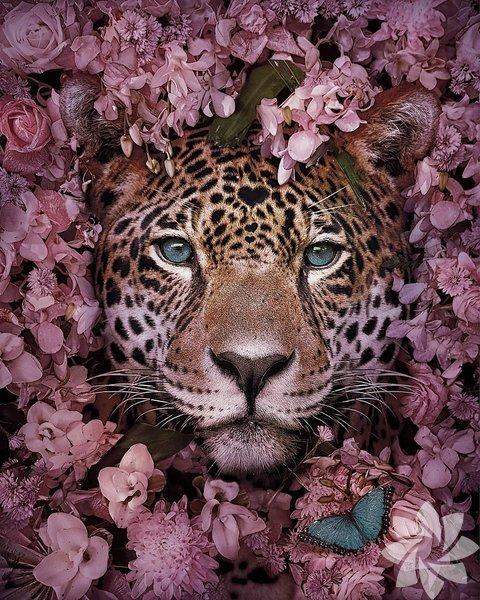 Nesli tükenmekte olan hayvanların etkileyici portreleri
