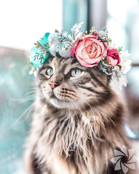 Çiçek açan hayvanlar