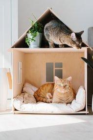 Eviniz kedi dostu mu?