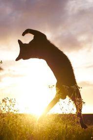 Dans eden kediler!