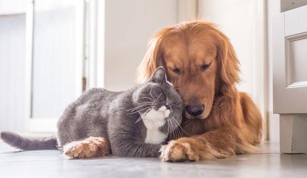 Dostluk gözlerle anlaşmaktır