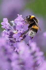 Arılar olmazsa gıda olmaz