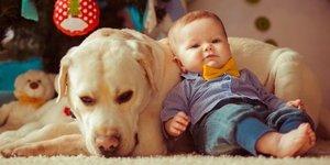 Evcil hayvanlar bebeklerin mikrobiyomuna faydalı