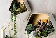 Duvarlarınızda bitkilere yer açın!