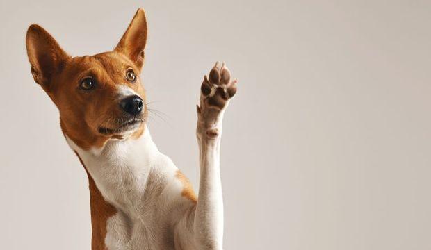 Köpekler iyiyle kötüyü ayırt edebiliyor
