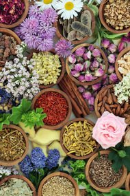 Bitkilerle güzellik