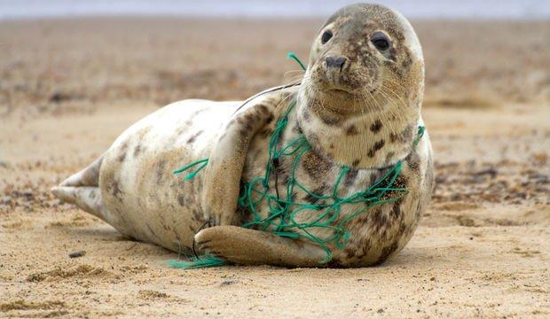 Doğaya zarar vermek suçtur!